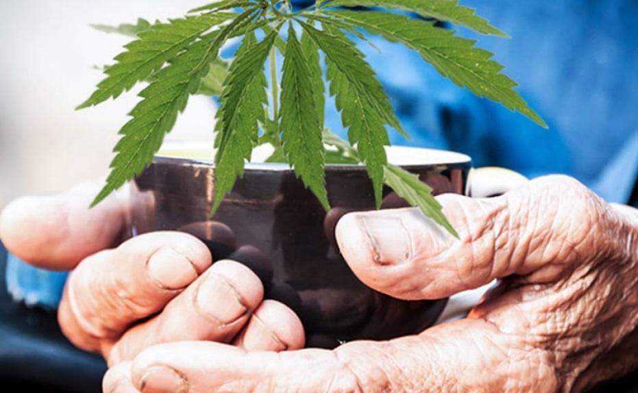 Cannabis et arthrose
