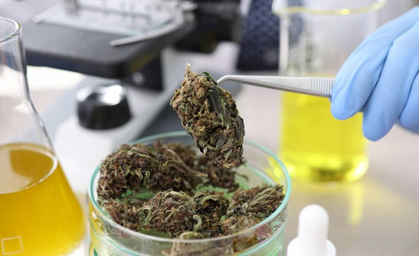 Cannabis en laboratoire