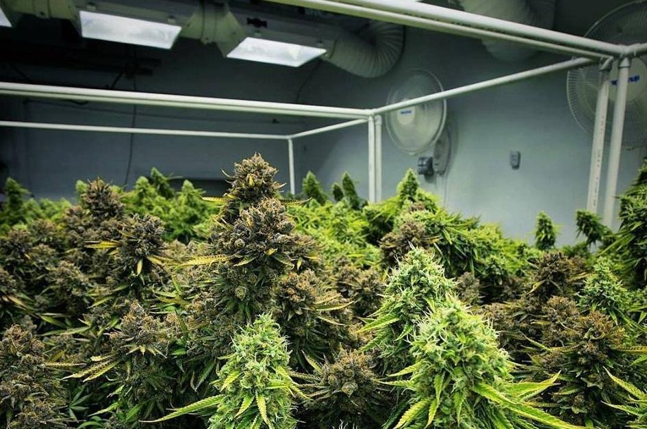 Cannabis production en intérieur
