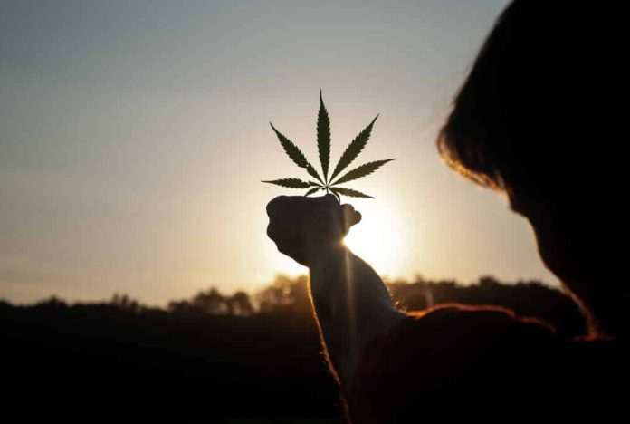 Homme qui tient une feuille de cannabis