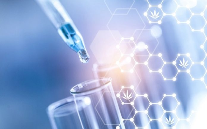 taux thc cannabis scientifique